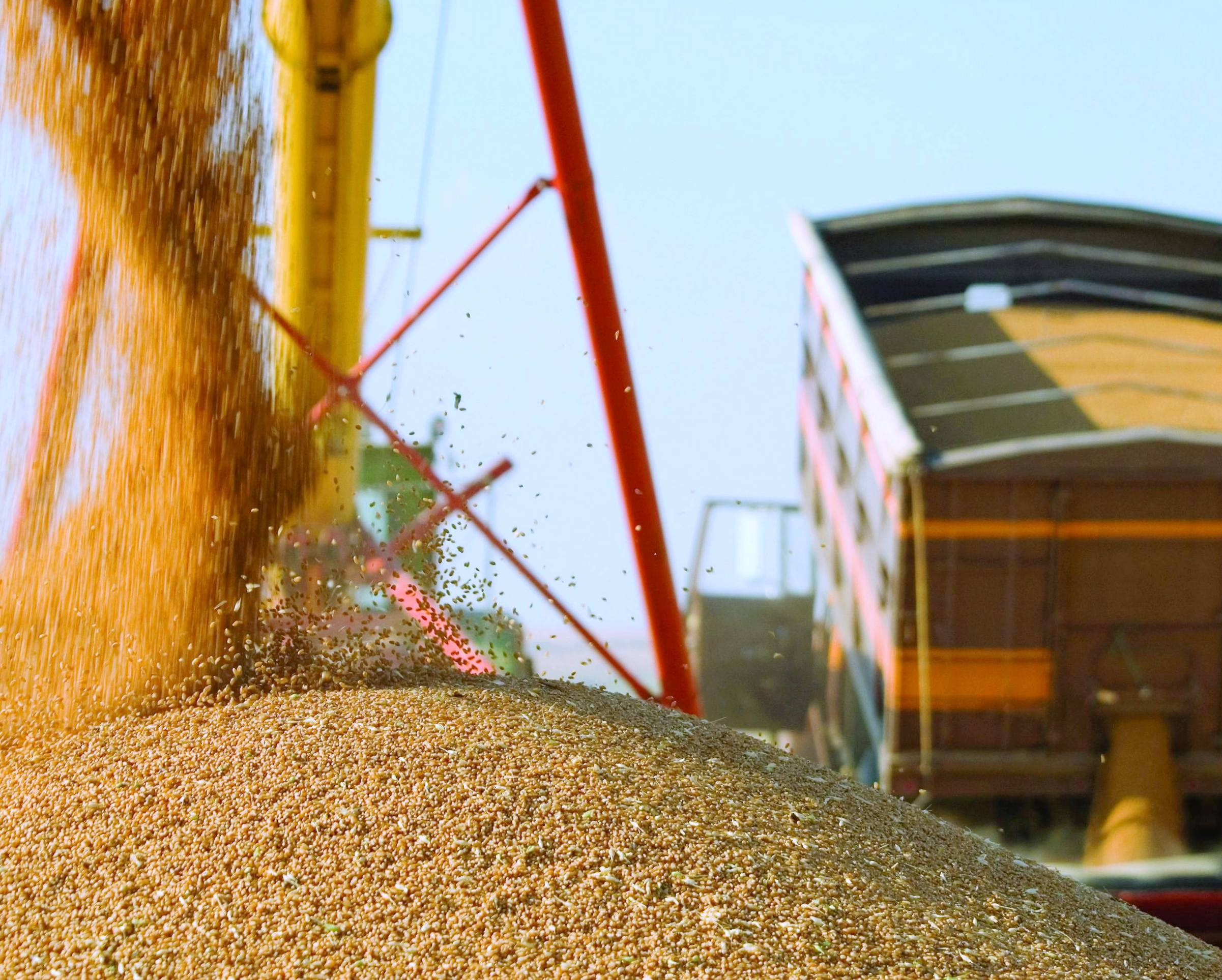 РФ снизила экспорт зерна