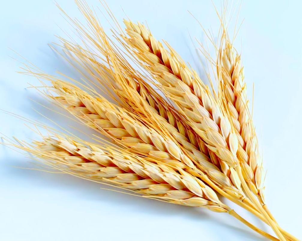 Украина к29июня намолотила 314 тыс. тонн ранних зерновых изернобобовых
