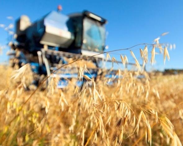 РФ хочет собрать 120-125 млн тонн зерна в будущем 2018