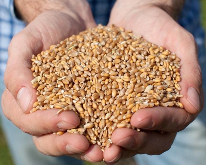 Украина загод экспортировала рекордные 43,8 млн тонн зерновых