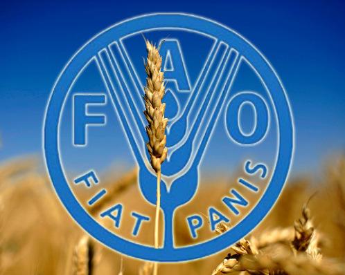 ООН передает омировом росте цен напшеницу имясо