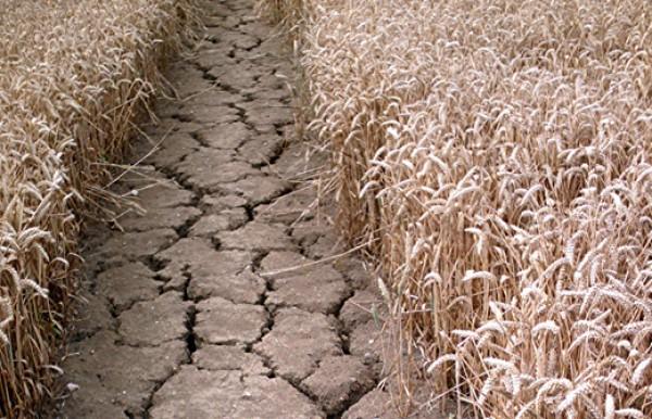 ООН: КНДР нуждается впомощи из-за сильнейшей засухи