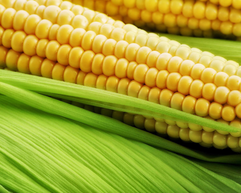 Европейская комиссия вводит пограничный збор наввоз кукурузы, сорго иржи