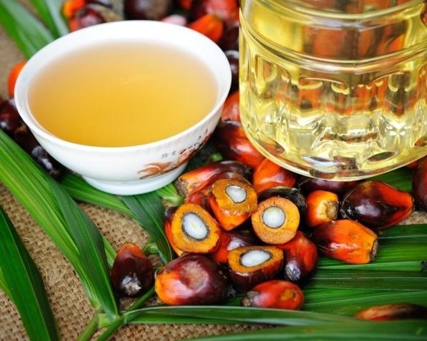 Россельхознадзор предлагает взять под контроль оборот пальмового масла исои