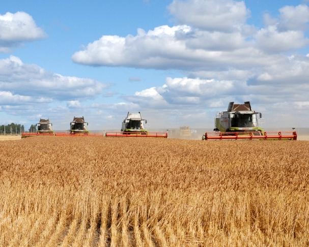 На15августа собрано 67 млн тонн зерна— Минсельхоз Российской Федерации