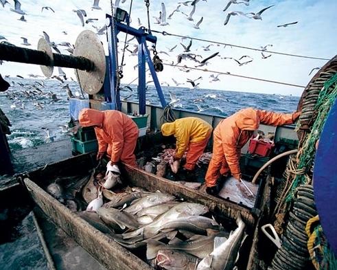 Теория развития рыбной ветви будет представлена к1ноября