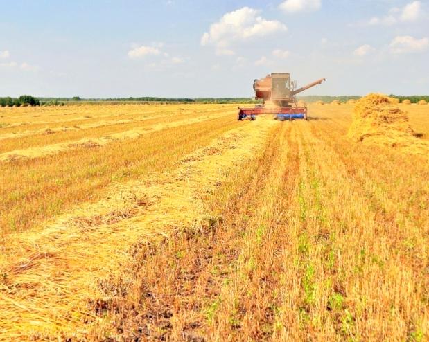 Минагрополитики: 15 областей собрали рекордные урожаи, вчисле их Николаевщина