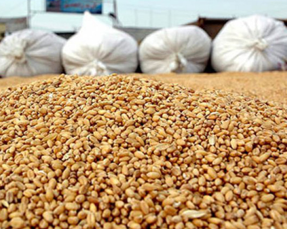 Минсельхоз: каждый год  РФ  теряет до15 млн тонн зерна из-за нехватки комбайнов