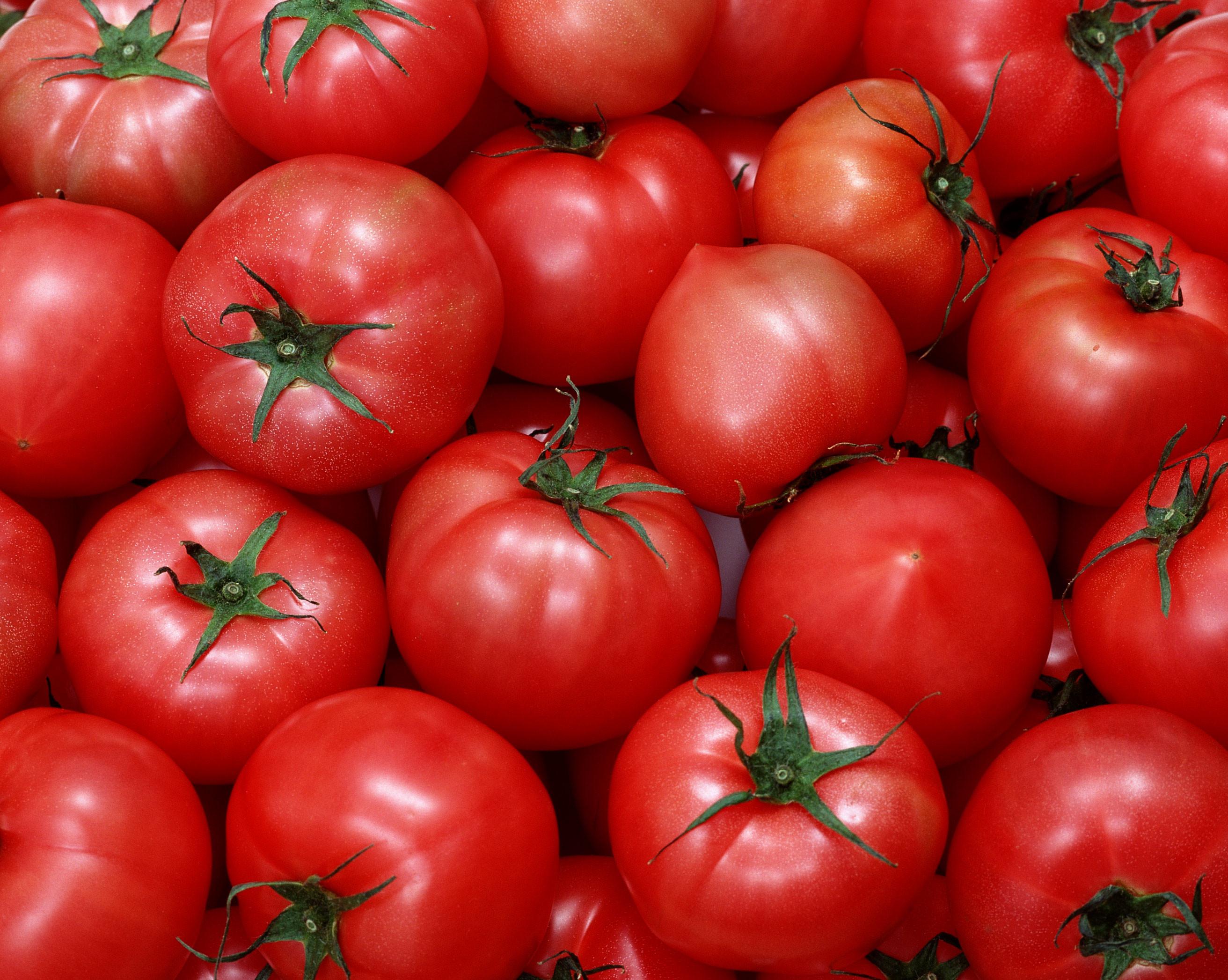 Минсельхоз придумал механизм восстановления поставок турецких томатов