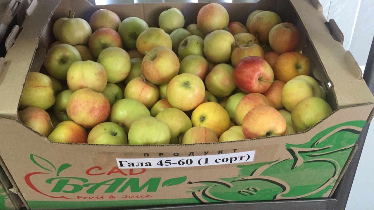 яблоки оптом краснодарский край плиту