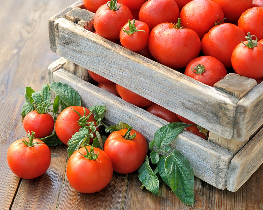 ВРоссельхознадзоре поведали, когда в Российскую Федерацию поступят турецкие томаты