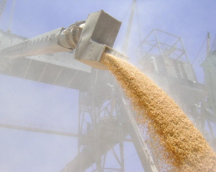 РФ  оттесняет США смировых рынков зерна