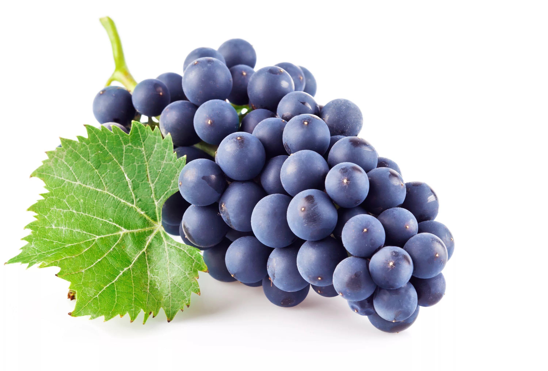 Около 4,4 млн саженцев винограда высадят наКубани в текущем году