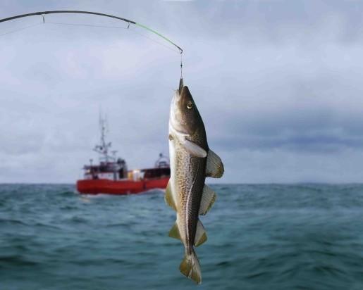 На далеком Востоке вылов рыбы увеличен до3 млн тонн