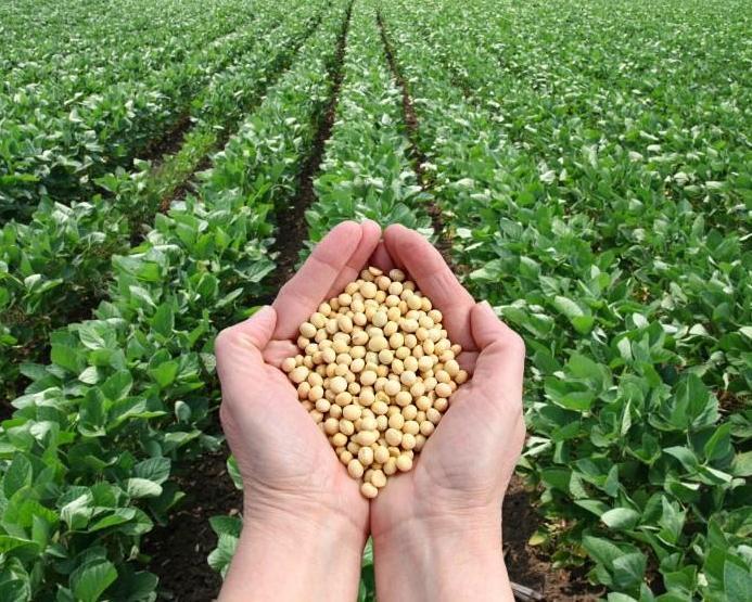 Ткачев поведал, каким будет экспорт зерна после рекордного урожая в Российской Федерации