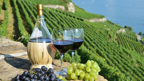 """Виноделы Крыма перешли """"на более интересные"""" вина из-за дефицита воды для полива"""