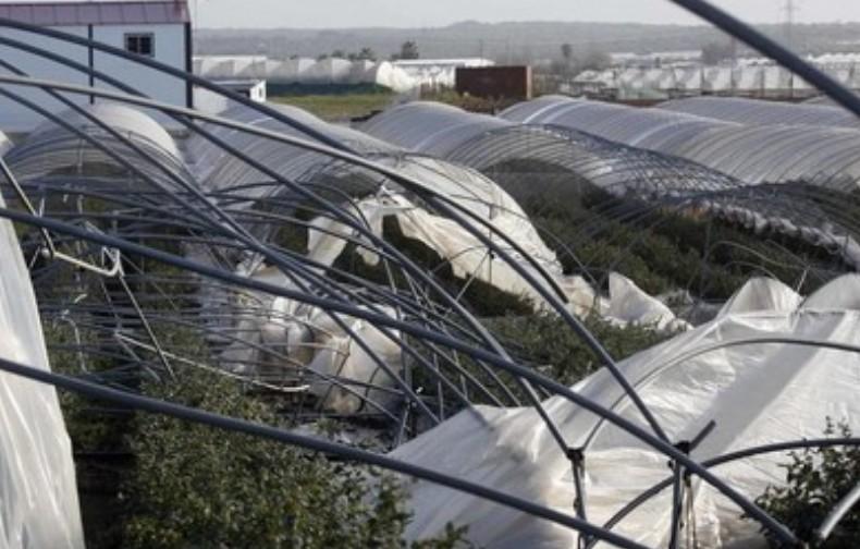 Испанский ягодный сектор пострадал от торнадо