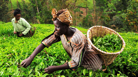 Российские компании вложатся в сельское хозяйство Зимбабве