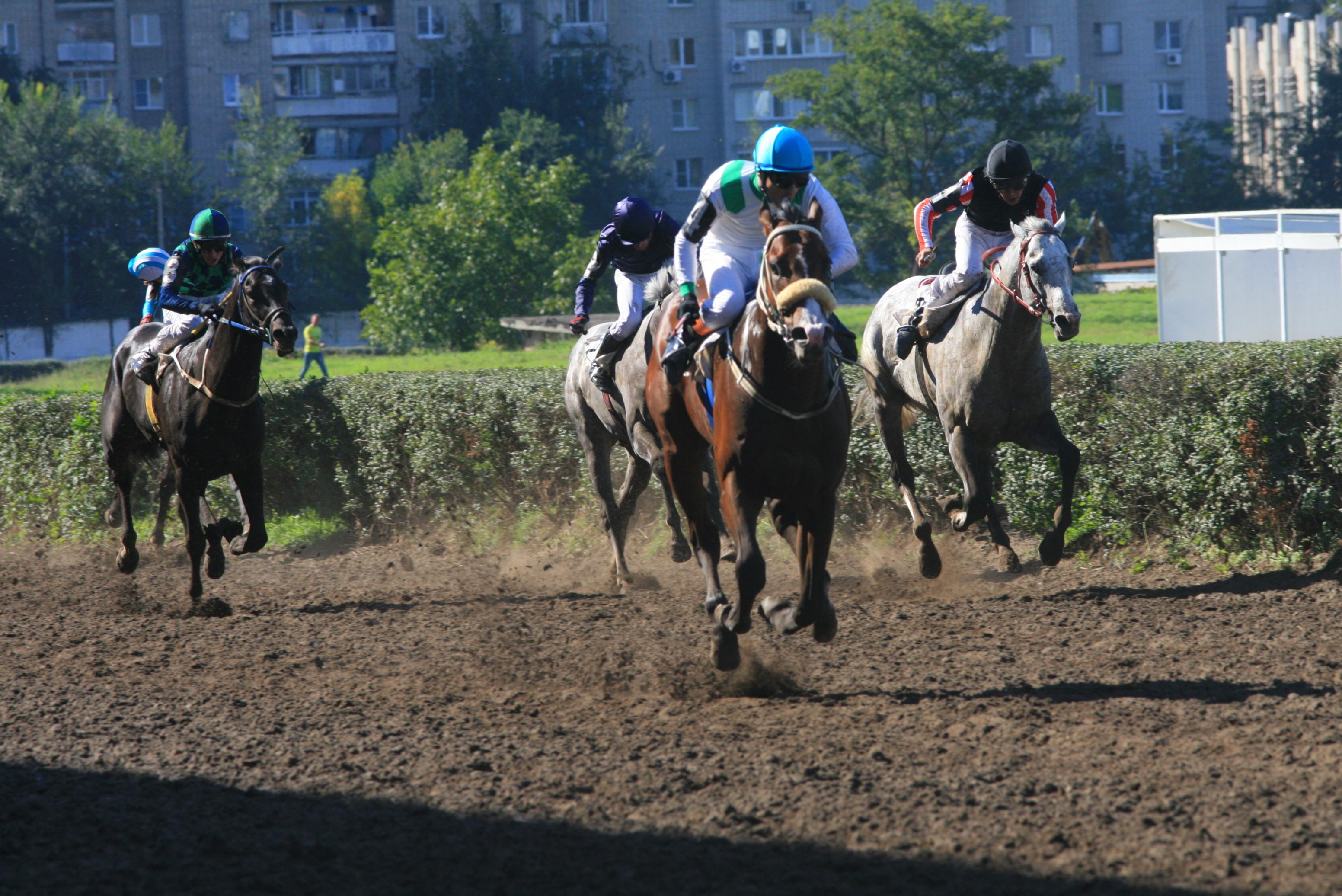 схема развития буденовской и донской породы лошадей
